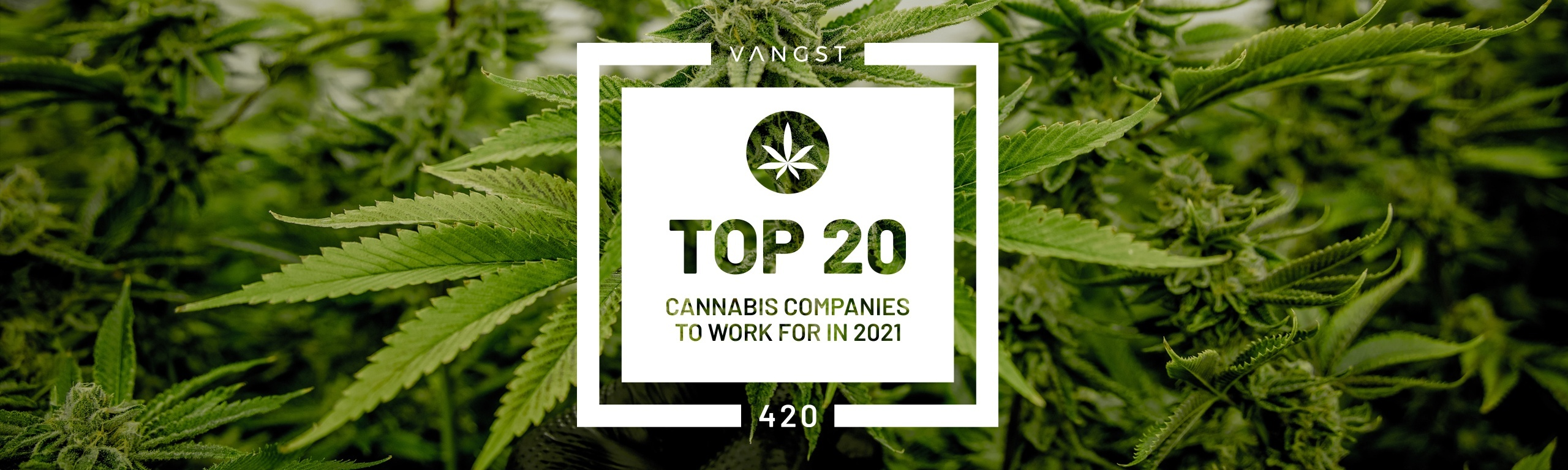 2021 Top Cannabis Companies to Work For