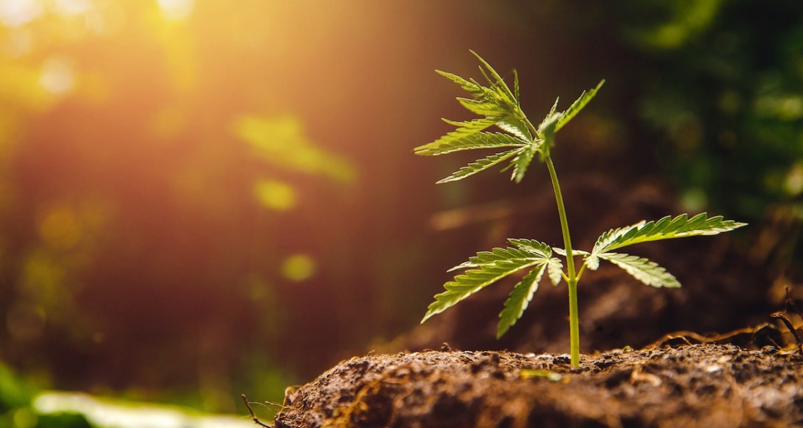2020 Cannabis Industry Predictions – The Future Looks Green