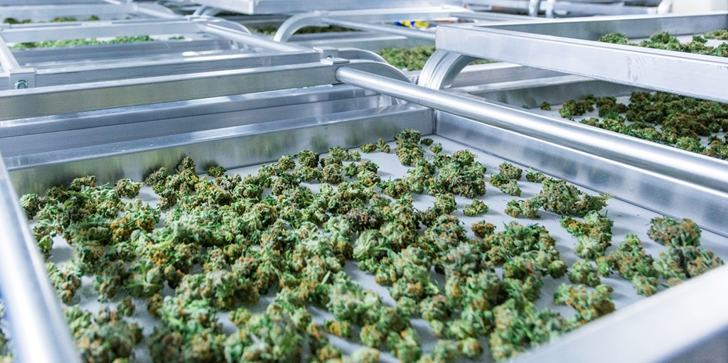 hero-graphic-Colas, MIPs, and Carb Caps — Learn These Definitions and More in Our Cannabis Terms Glossary