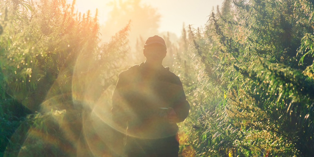 hero-graphic-Hot Jobs in the Cannabis Industry for 2020