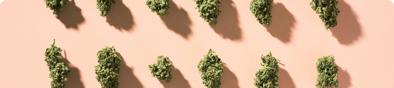 Cannabis Verticals